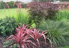 nz gardens before and after - Google Search