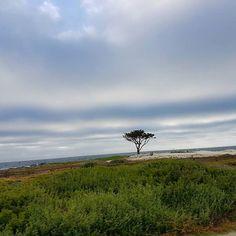 Amando esse país cada vez mais...#californialove #sunnyvale #sanfranscisco #saofrancisco #EUA #eua #férias #vacation #vacations  #travel #travelblogger #photography #trip #trips #viajar #holiday #nortamerica #america #america #family #santacruz  #beach #monterey #montereybay #santacruz #blogger #bloggers #sunnyvale #couple #love #family #landscape #naturephotography #nature #montereybaylocals - posted by Marcos Paulo https://www.instagram.com/marcospaulosouzaolivera - See more of Monterey…