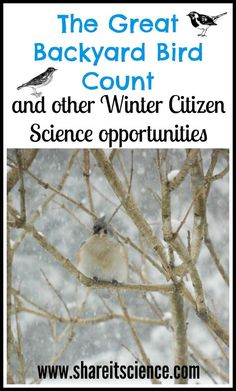 Share it! Science News : The Great Backyard Bird Count and other Winter Citizen … Share it! Science News : The Great Backyard Bird Count and other Winter Citizen Science Activities Steam Activities, Craft Activities For Kids, Science For Kids, Science Activities, Science Projects, Science And Nature, Science Writing, Nature Activities, Kindergarten Science