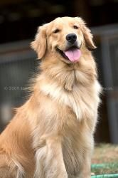 What a good looking dog!