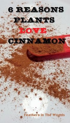 Feathers in the woods: Spice it up! Why plants love cinnamon