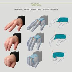 Bending and connecting line of fingers by Anatomy Next