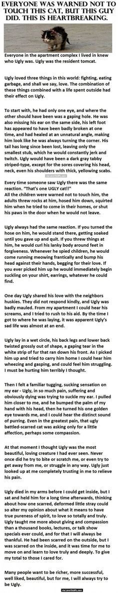 Everyone Was Warned Not To Touch This Cat But This Guy Did. This Is Heartbreaking. love animals cat cats sad amazing story animal stories heart warming heart breaking