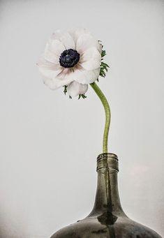 anemone02.jpg (600×869)