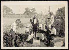 a school beekeeping class. Curlwaa Public School - beekeeping, searching for Queen cells. 1940