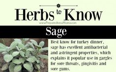 Herbs to Know: Sage. Growing conditions and use | PreparednessMama