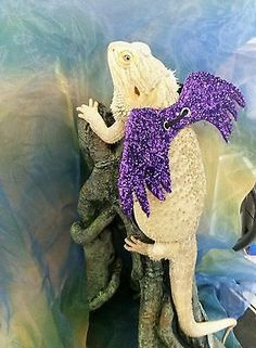 Bearded Dragon Wings Costume and Harness Combo | SHUT THE FRONT DOOR! Mushu's gonna hate me haha.