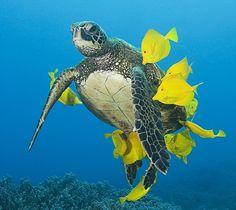 Tortuga de mar y peces amarillos