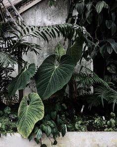 @absinthemindedmagazine on Instagram