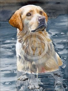 Bailey by Judith Stein on ARTwanted