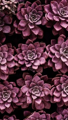 Natur Wallpaper iPhone ::… Klicken Sie hier, um Nature Wallpaper iPhone Down . Succulents Wallpaper, Plant Wallpaper, Flower Wallpaper, Décor Violet, Shades Of Violet, Trendy Wallpaper, Wallpaper Backgrounds, Iphone Wallpaper, Iphone Backgrounds