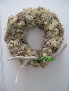 Antler wreath moss.