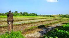 Tanah di Tabanan Bali - Tanah dijual lokasi di Tangguntiti Selemadeg Timur