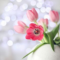 pink tulips with sparkle background
