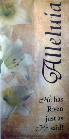 "Banner - Alleluia He Has Risen - 60"" X 30"" by He Is Risen. $25.90. Use for meetings, gatherings, special events, or for decoration. Grommets in each of the four corners for easy mounting/hanging.. Great to share with others, using in schools, VBS, etc.. 60"" Tall and 30"" Wide Banner entitled ""Alleluia, He Has Risen Just as He Said."" Indoor use, easy care polyester.. Picture of flowers. Celebrates the resurrection of Jesus Christ.. Great for all indoor uses.. 60""..."