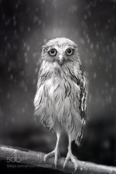 Photograph Standing in the rain... by Sham Jolimie on 500px