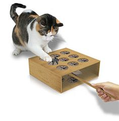 ThinkGeek :: Cat Whack a Mole $9.99 I would love this for my cat! Probably best with kittens :D