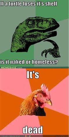 anti joke chicken / the turtle is dead