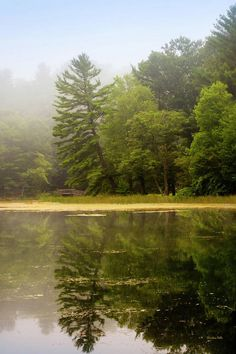 Foggy Morning Lake Reflection Art Print by Christina Rollo. All prints are professionally printed, packaged, and shipped within 3 - 4 business days. Choose from multiple sizes and hundreds of frame and mat options. Canvas Art Prints, Fine Art Prints, Artistic Tree, Reflection Art, Thing 1, Foggy Morning, Wonderful Images, Amazing Nature, Wood Print