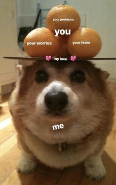 """23 Relationship Memes That Range From Sappy To Saucy - Funny memes that """"GET IT"""" and want you to too. Get the latest funniest memes and keep up what is going on in the meme-o-sphere. Corgi Funny, Cute Corgi, Corgi Dog, Cute Puppies, Corgi Meme, Small Puppies, Cute Funny Animals, Funny Cute, Hilarious"""