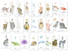 Animal Alphabet Flash Card Set - full color watercolor illustrations on each card. Prints of my original watercolor paintings. Each letter in the English alphabet is represented by a sweet littl Alphabet Cards, Alphabet Book, English Alphabet, Alphabet Letters, Watercolor Paintings Of Animals, Animal Paintings, Animal Alphabet, Enchanted Forest Nursery Theme, T Turtle