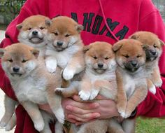 armful of puppies!