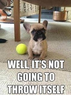 So our little dog funny dog images, funny dogs, funny animal pictures, puppy Funny Dog Images, Funny Dog Captions, Cute Animals With Funny Captions, Dog Quotes Funny, Funny Animal Memes, Dog Memes, Funny Animal Pictures, Cute Baby Animals, Funny Dogs
