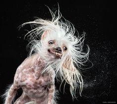 a splashing dog