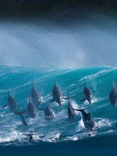 Dolphins, Port St Johns, South Africa. Photo: Wim van den Heever