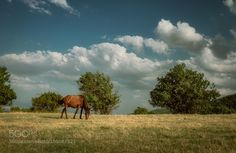 Horse life by pboskovski #animals #animal #pet #pets #animales #animallovers #photooftheday #amazing #picoftheday