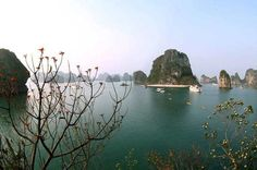 Halong Bay Day Cruise Including Seafood Lunch from Hanoi The Ha Long Bay archipelago is made up of 1,969 islands, both settled and uninhabited. These can be accessed from various ports, though in the special case of Cat Ba you can also arrive either by car, motorbike or bus (via Haiphong) or combined bus/boat (from Hanoi via Ha Long City).H? Long Bay, in northeast Vietnam, is known for its emerald waters and thousands of towering limestone islands topped by rain forests. Junk ...