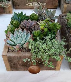 Succulent gardens in recycled timber drawers available from the Succulent Guy at the Byron Bay Beachside Market - Easter Saturday 26th March.