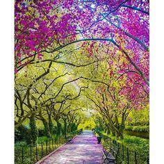 【kiritosalaamyeah】さんのInstagramをピンしています。 《Autumn path🍁🌸👣 #flowerlovers #桜 #벚꽃 #summer #fashion #motivational #inspirational #anime #pets #셀카그램 #love #japan #flowers #樱花 #셀카그램📷 #셀카 #hanami #цветок #셀피 #like4like #smiles  #맞팔 #catsofinstagram #pink #cute #가을 #autumn #beautiful #foodporn #nature Hey, I was doing just fine before i met you. I sweat too much I think i need a tissue🎵lol》