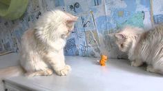 Игрушки  для  кошек.Toys for cats.