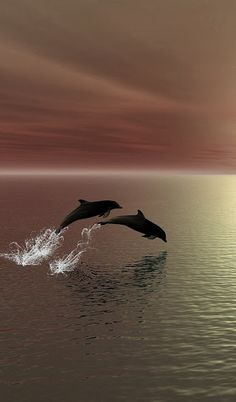 #sunset #ocean #dolphin