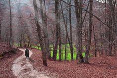 Path+-+Autunno+-+Il+sentiero+di+Montagna