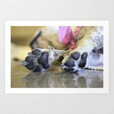 Os Patudos - French Bulldog Art Print by Elias Silva Photography - $16.00