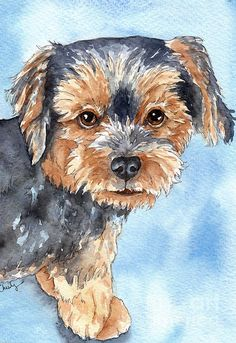 Copper Yorkie Yorkshire Terrier Dog Watercolor Painting  - Copper Yorkie Yorkshire Terrier Dog Watercolor Fine Art Print