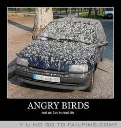 Angry Birds In Real Life..