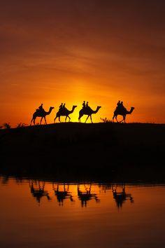 canislupvs:  Safari || Ali Al-Zaidi