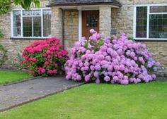 hortenzie Holland, Gardening, Plants, The Nederlands, Garten, Netherlands, The Netherlands, Lawn And Garden, Planters
