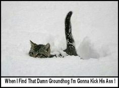 That's for sure!!!  Kill the groundhog...
