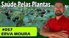 Saúde Pelas Plantas - Erva Moura [cólicas, estresse, cistite, cicatrizan...