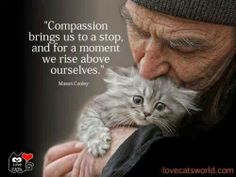 "Compassion does not hurt. Compassion not done is a bastard horror that should be outlawed. ""should"" a word without teeth. Crazy Cat Lady, Crazy Cats, I Love Cats, Cute Cats, Animals And Pets, Cute Animals, Gatos Cool, Cat People, Rise Above"