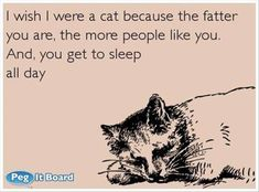 I wish I were a cat ..... #Funny