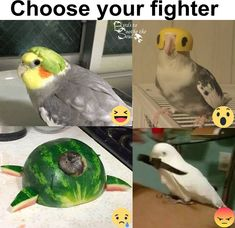 """17 Bird Memes To Beak Your Interest 17 Bird Memes To Beak Your Interest - Funny memes that """"GET IT"""" and want you to too. Get the latest funniest memes and keep up what is going on in the meme-o-sphere. Funny Animal Memes, Cute Funny Animals, Stupid Funny Memes, Funny Animal Pictures, Funny Cute, Hilarious, Funniest Memes, Funny Birds, Cute Birds"""