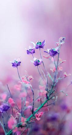宁馨郁金香采集到一花一天堂——四季之春暖花开(3687图)_花瓣摄影