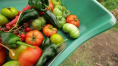 Food and Carbon Garden lesson plan with video, grades 3 – 12