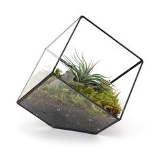 Leaded Glass Cube Terrarium