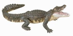 Alligator figure
